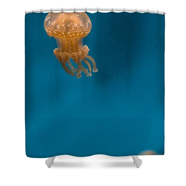 Hovering Spotted Jelly 2 Shower Curtain