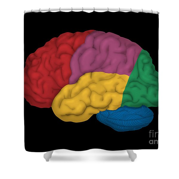 Human Brain, Lateral View Shower Curtain