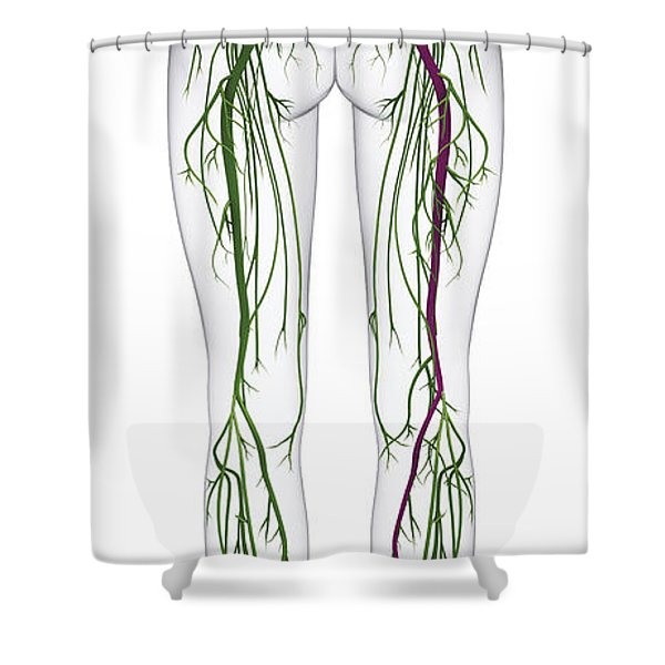 Human Nervous System, Lower Body Shower Curtain