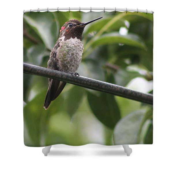 Hummer On A Wire Shower Curtain