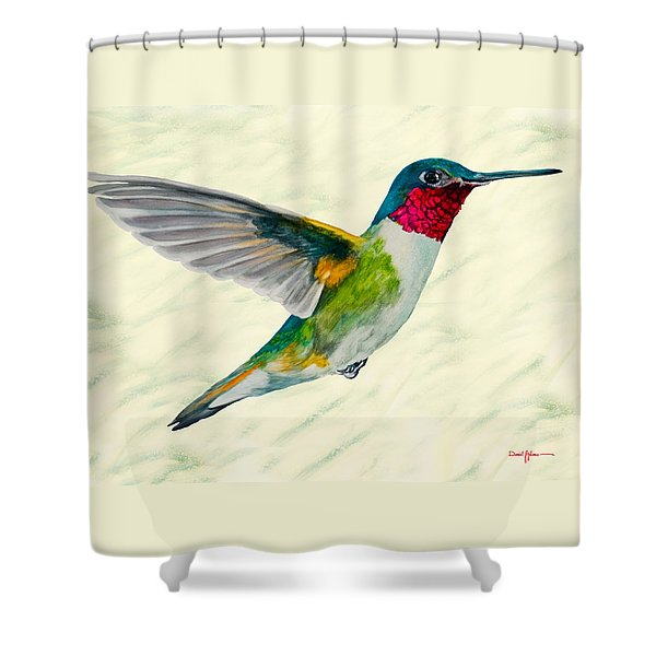 Da103 Broadtail Hummingbird Daniel Adams Shower Curtain