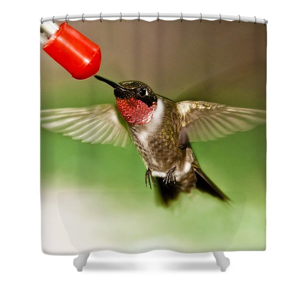 Shower Curtain featuring the photograph Hummingbird by Robert L Jackson