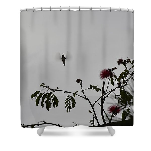 Hummingbird Silhouette I Shower Curtain