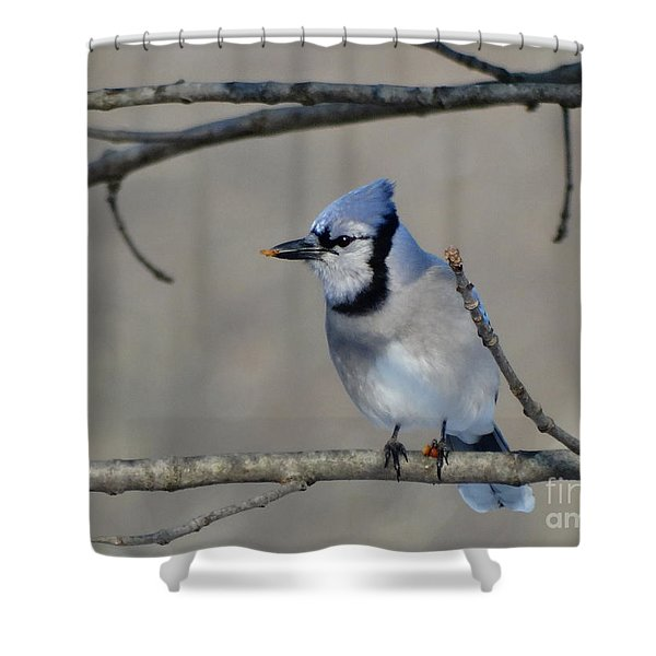 Hungry Blue Jay Shower Curtain