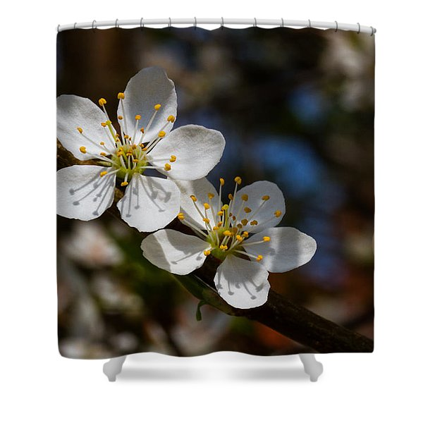 Hungry For Sun Shower Curtain