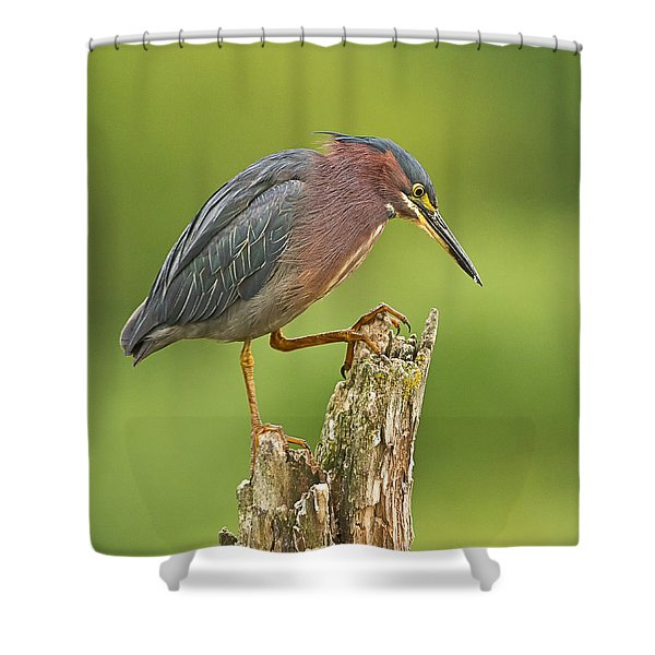 Hunting Green Heron Shower Curtain