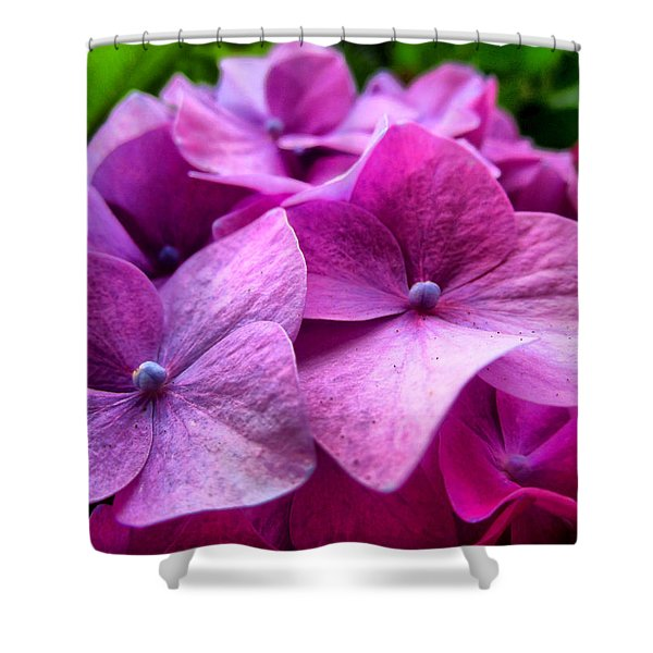 Hydrangea Bliss Shower Curtain