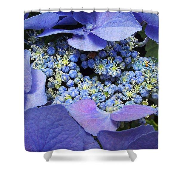 Hydrangea Blossom Shower Curtain