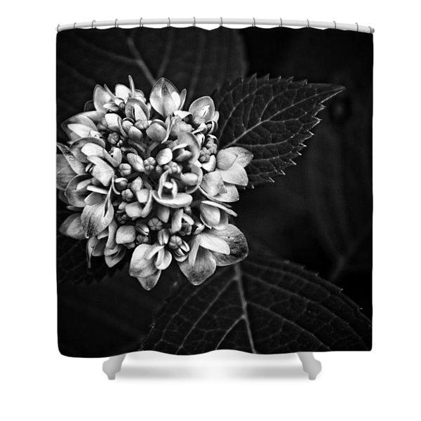 Hydrangea In Monochrome #5 Shower Curtain