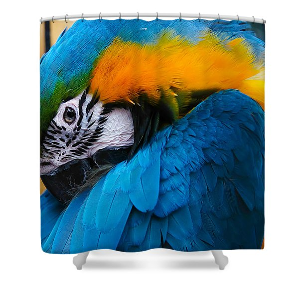 Shower Curtain featuring the photograph I Always Feel Like Somebody's Watching Me by Robert L Jackson