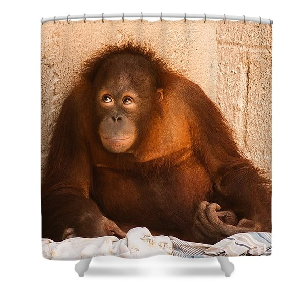 Shower Curtain featuring the photograph I Didn't Mean To Do It by Robert L Jackson