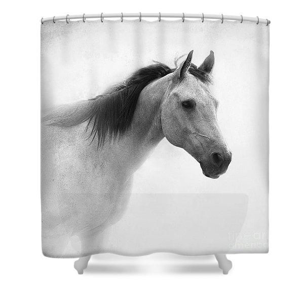 I Dream Of Horses Shower Curtain
