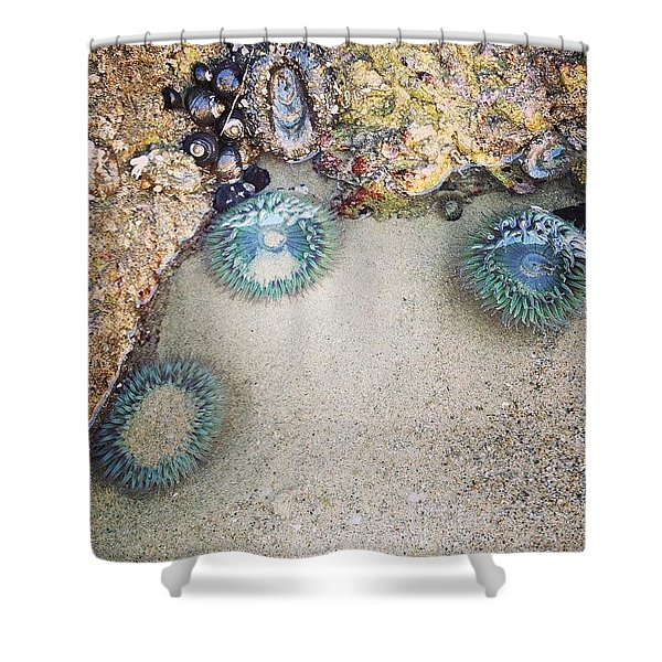 I Met Sea Anemones Shower Curtain