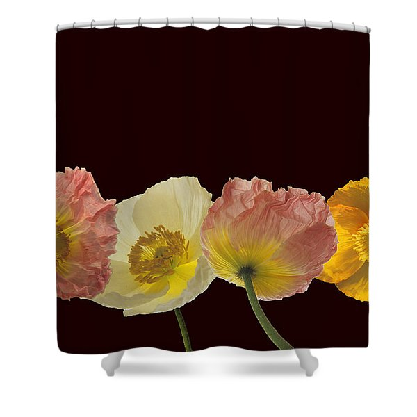 Iceland Poppies On Black Shower Curtain