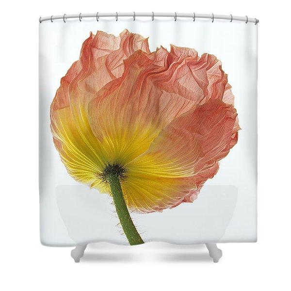 Iceland Poppy 1 Shower Curtain