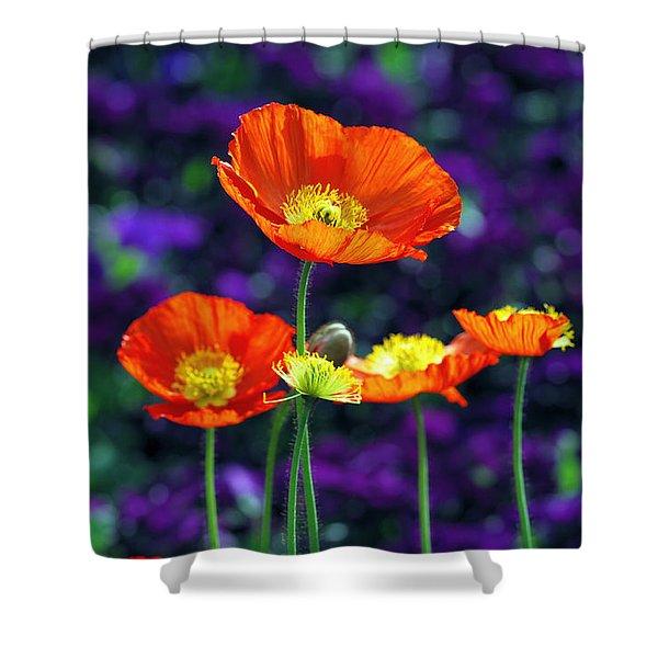 Iceland Poppy Shower Curtain
