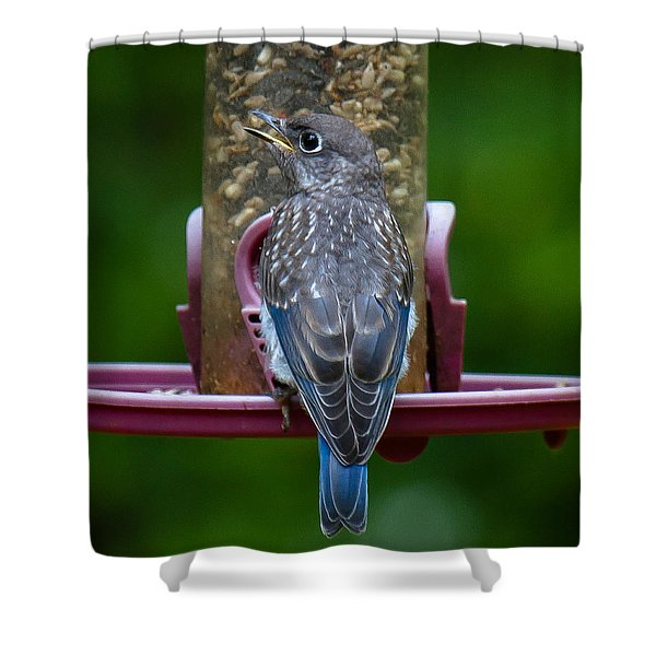 Shower Curtain featuring the photograph I'm Just Cute by Robert L Jackson