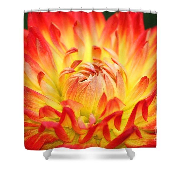 Img 0023 Flor En Rojo Detalle Shower Curtain