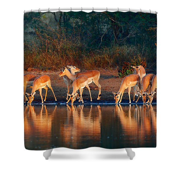 Impala Herd With Reflections In Water Shower Curtain