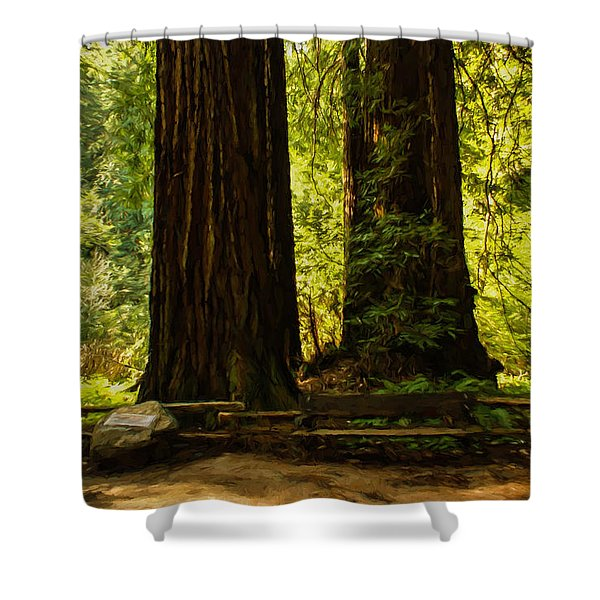 Impressions Of Muir Woods California Shower Curtain
