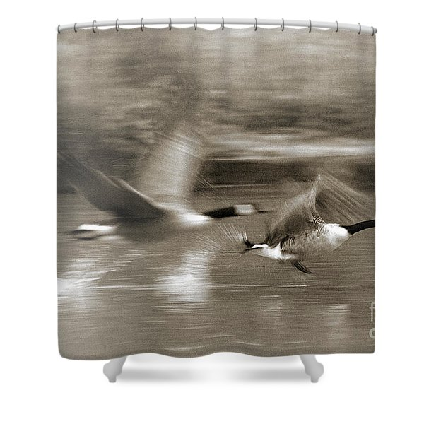 In A Blur Of Feathers Shower Curtain