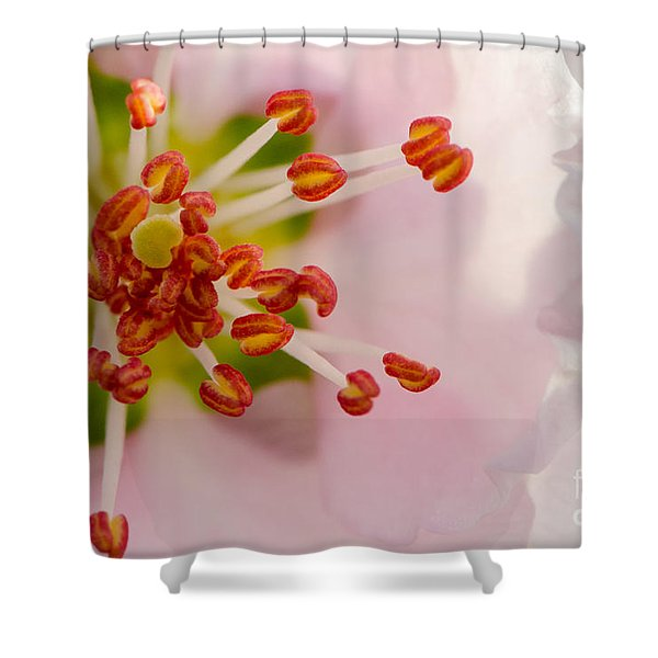 In A Pink Cloud Shower Curtain