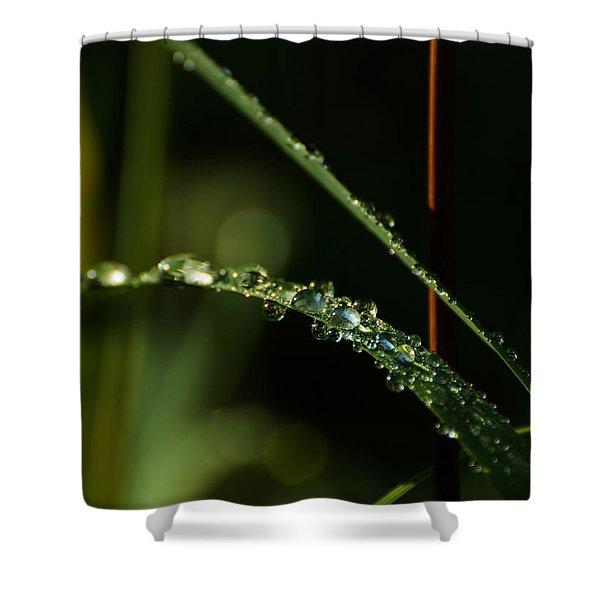 In Praise Of Rain Shower Curtain