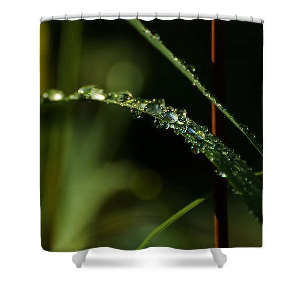 In Praise Of Rain Shower Curtain