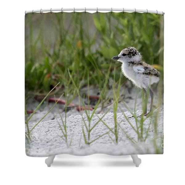 In The Grass - Wilson's Plover Chick Shower Curtain