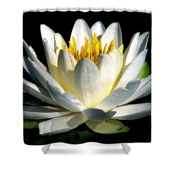 In The Still Of The Night Shower Curtain
