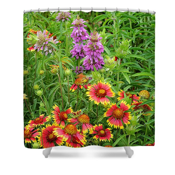 Indian Blankets And Lemon Horsemint Shower Curtain