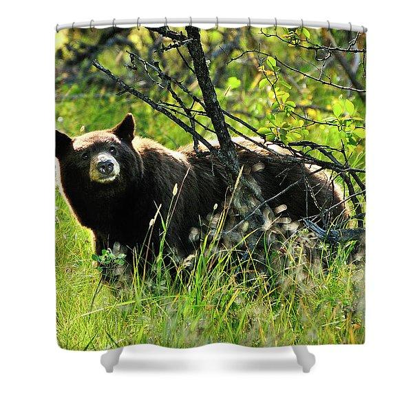 Inquisitive Bear Shower Curtain