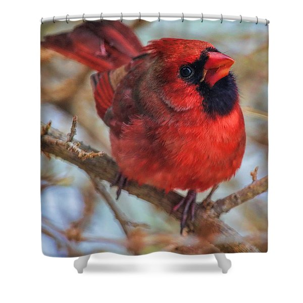 Inquisitive Cardinal Shower Curtain