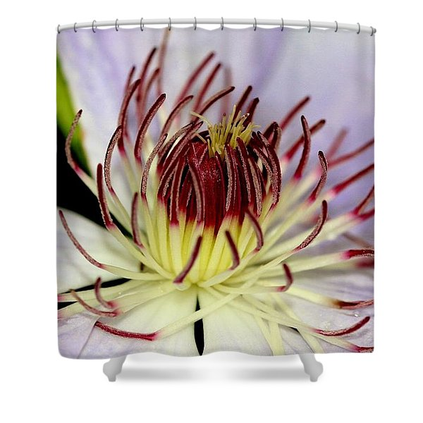 Inside A Clematis Shower Curtain