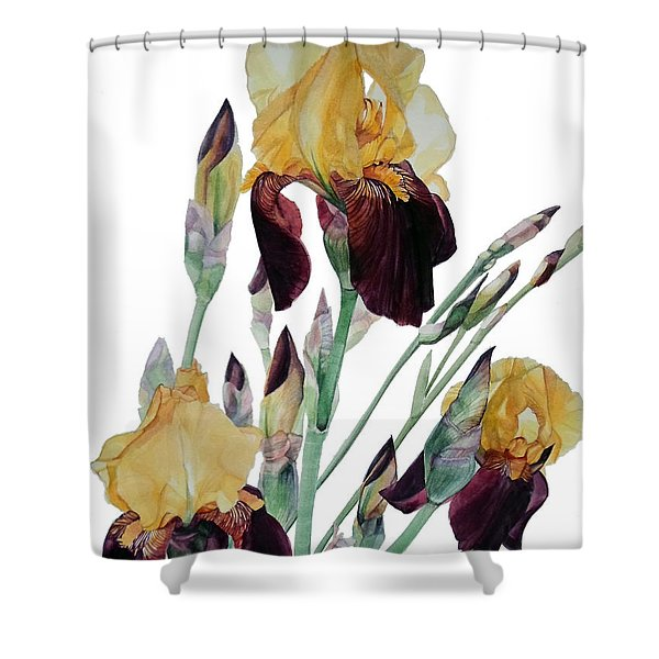 Watercolor Of Tall Bearded Iris In Yellow And Maroon I Call Iris Beethoven Shower Curtain