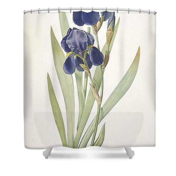 Iris Germanica Bearded Iris Shower Curtain