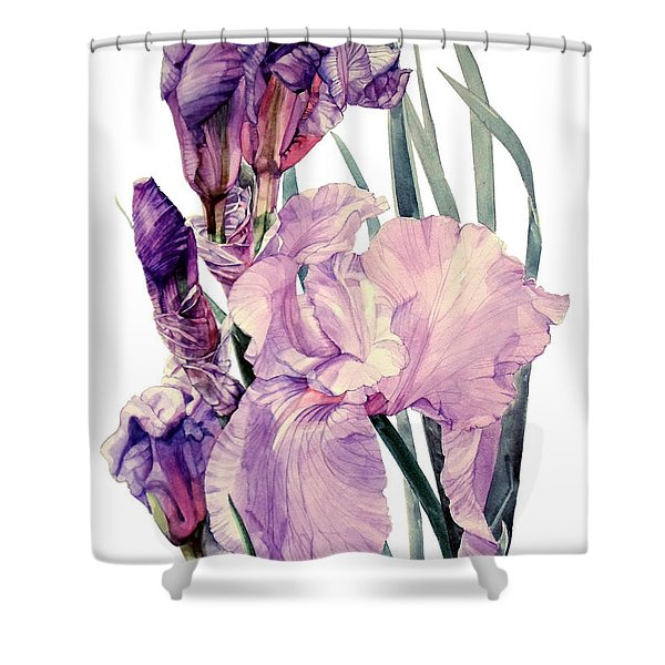 Watercolor Of An Elegant Tall Bearded Iris In Pink And Purple I Call Iris Joan Sutherland Shower Curtain