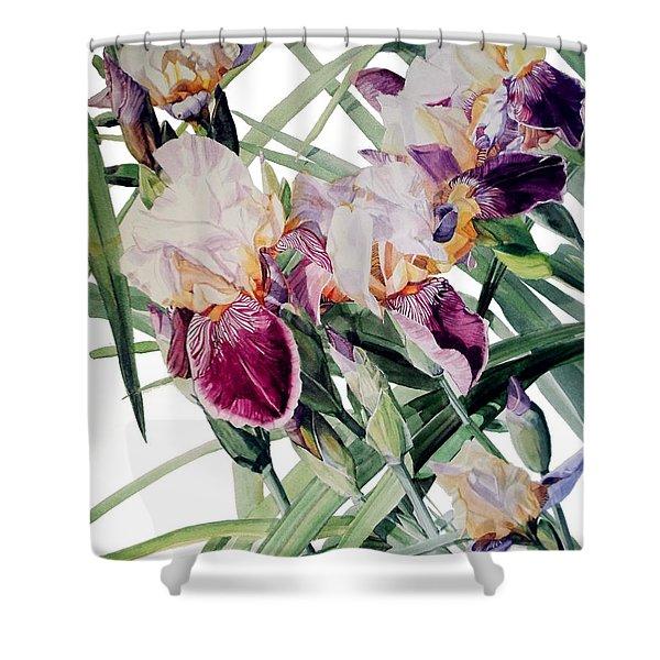 Watercolor Of Tall Bearded Irises I Call Iris Vivaldi Spring Shower Curtain