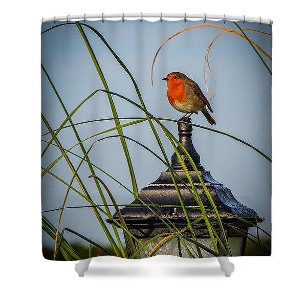 Irish Robin Perched On Garden Lamp Shower Curtain