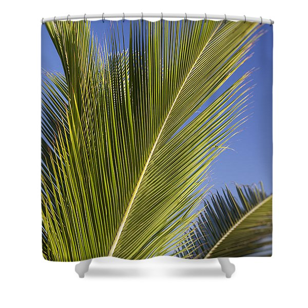 Shower Curtain featuring the photograph Isabel Beach In Puerto Rico Palm Trees Against Blue Sky by Bryan Mullennix