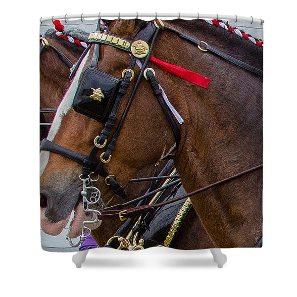 Shower Curtain featuring the photograph It's Pretty Horse Day by Robert L Jackson