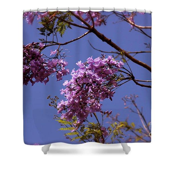 Jacaranda Blooms Shower Curtain