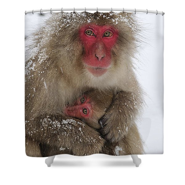 Japanese Macaque Warming Baby Shower Curtain