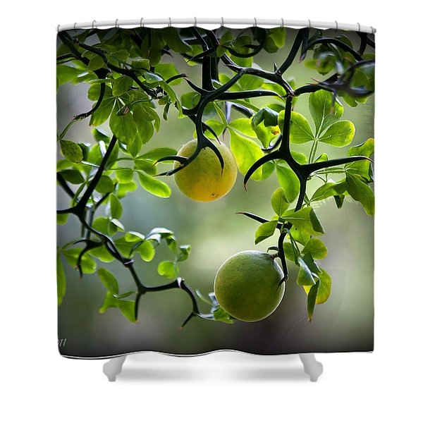 Japanese Orange Tree Shower Curtain