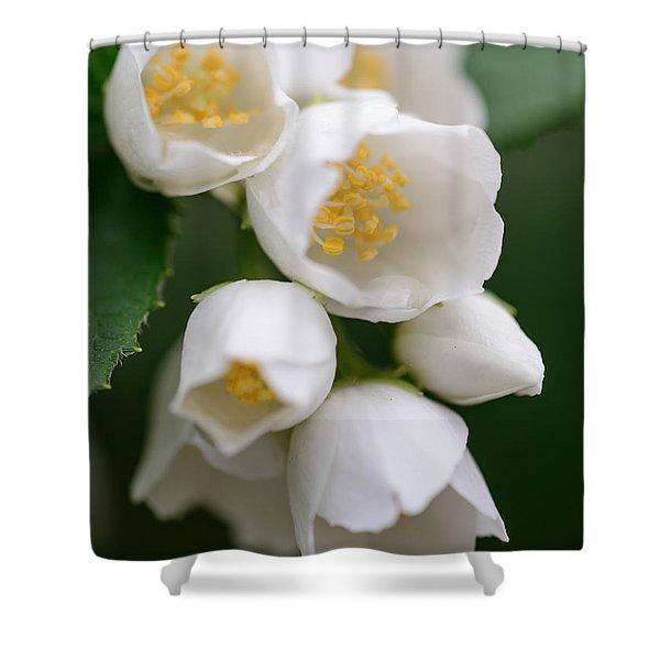 Jasmin Flowers Shower Curtain