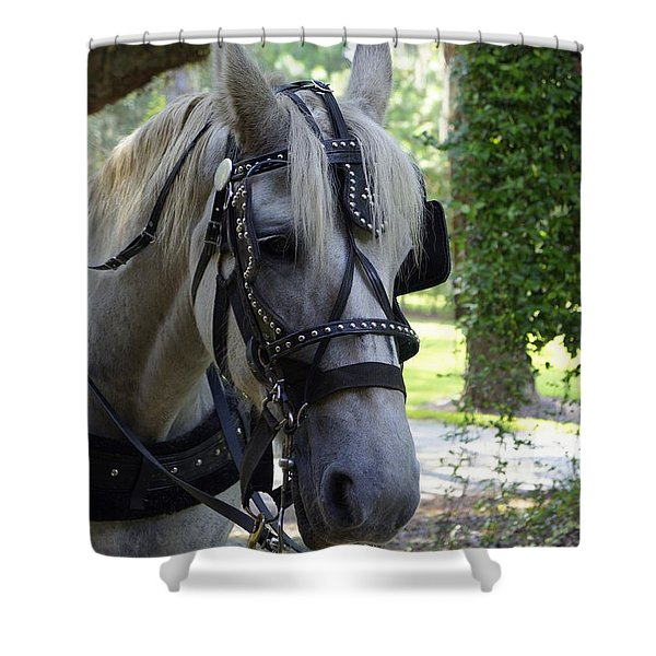 Jekyll Horse Shower Curtain