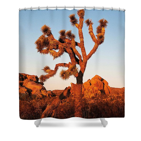 Shower Curtain featuring the photograph Joshua Tree At Sunset by Mae Wertz