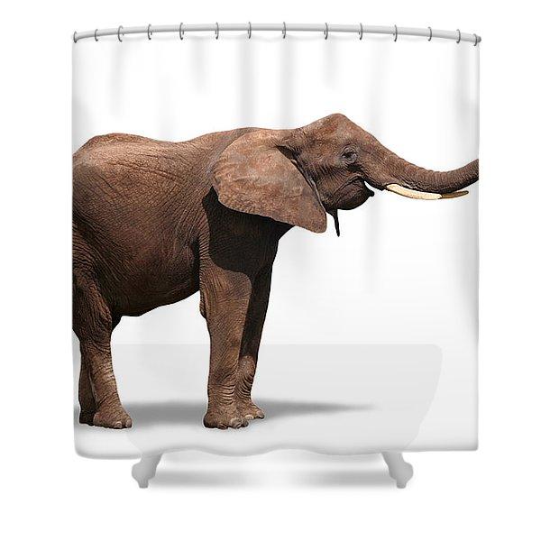 Joyful Elephant Isolated On White Shower Curtain