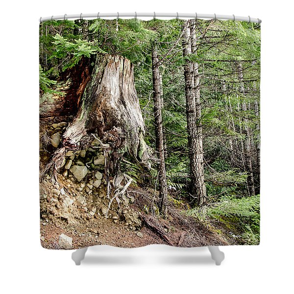 Just Hanging On Old Growth Forest Stump Shower Curtain