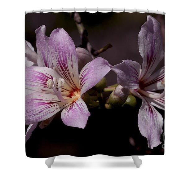 Kapok Bloom Shower Curtain